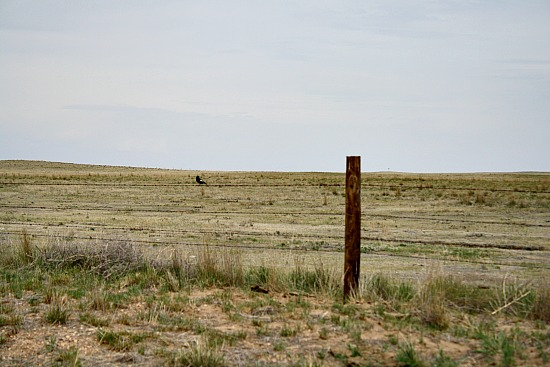 Birding Pawnee National Grasslands Colorado