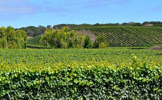 Foley Winery