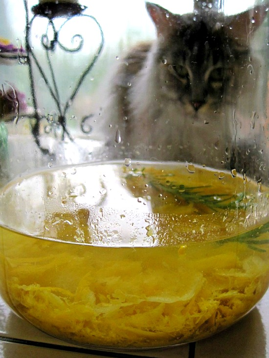 Limoncello Recipe. Step by step on how to make homemade limoncello.