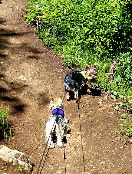 hiking-trail-pearl-lake-state-park